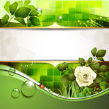 Green background with rose Stock Image
