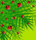Green background with small ladybug Stock Photos