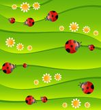 Green background with small ladybug Royalty Free Stock Photo