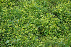 Green background of small plants. Royalty Free Stock Images