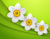 Green Background with spring flower Royalty Free Stock Photography