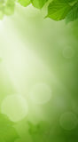 Green Background with Spring Leaves and Sunlight Royalty Free Stock Photography