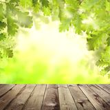 Green background with spring oak leaves and gray wooden table stock photography