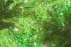 Green background with stars, conifer and bokeh lights Royalty Free Stock Image