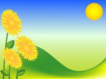 Green background with sunflowers Stock Image