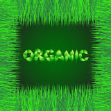 Green background with text made from leaves organic. Illustration with vegetative grasses border. Stock Image
