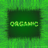 Green background with text made from leaves organic. Illustration with vegetative grasses border. Vector illustration. Royalty Free Stock Image