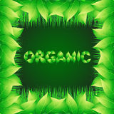 Green background with text made from leaves organic. Illustration with vegetative grasses and ornamental border. Stock Photography