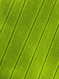 Green background texture for text area and lifestyle Stock Photography