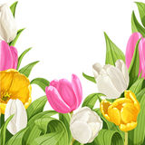 Green background of tulips Stock Image