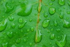Green background with water drops Stock Images