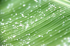 Green background with water drops Stock Photography