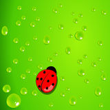 Green background with waterdrops and ladybug Royalty Free Stock Photos