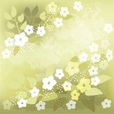 Green background with  white flowers Royalty Free Stock Images