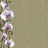 Green background with white orchid flowers Stock Photo