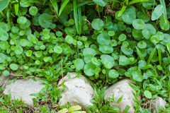 Green backgrounds Stock Photography