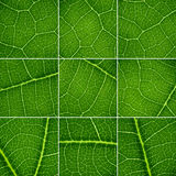 Green backgrounds set. Royalty Free Stock Images