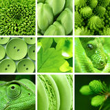 Green backgrounds and textures collage Royalty Free Stock Image