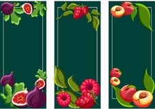 Green backgrounds with tropical fruits. vector illustration