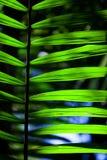 Green backlit leaf in the jungle Stock Images
