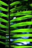 Green backlit leaf in the jungle Stock Image
