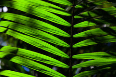 Green backlit leaf in the jungle stock photography