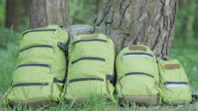 Green backpacks of different sizes stand on the grass near the tree in the forest in the summer. The concept of outdoor. Recreation stock footage