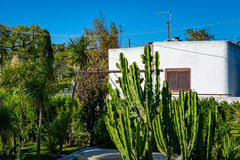 Green backyard with cactus and palms of a typical white house in Royalty Free Stock Photo