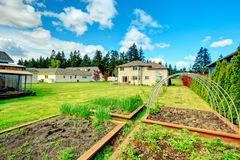 Green backyard with garden bed Royalty Free Stock Photography