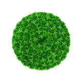 Green ball Royalty Free Stock Photography