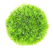 Green ball grass Royalty Free Stock Photo