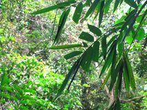 Green bamboe tropical rainforest background.  stock images