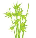 Green Bamboo Royalty Free Stock Photography