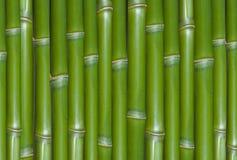Green bamboo. A closeup of vertical, green bamboo, suitable for an abstract background Stock Photos