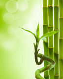 Green bamboo. Green decorative bamboo on a white backround royalty free stock photo