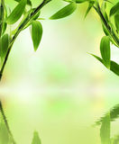Green bamboo. Over abstract blurred background Royalty Free Stock Images