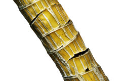 Green bamboo. Stalk of the bamboo - cracked (path included Stock Photo