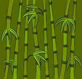Green bamboo. Royalty Free Stock Photography