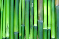 Green Bamboo. Details for background Royalty Free Stock Photo