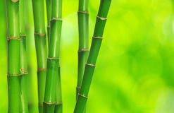 Green bamboo. Isolated on a green background Stock Photos