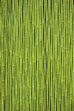 Green Bamboo Stock Photography