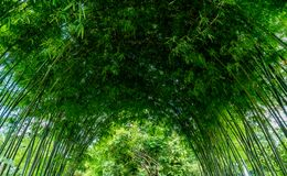 Green bamboo arch. In Japanese garden Royalty Free Stock Images