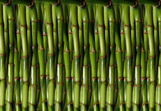 Green bamboo as a backdrop. abstraction Stock Photo