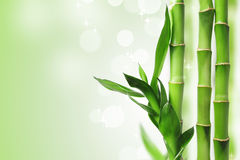 Green bamboo background. Green bamboo against bokeh background Stock Photo