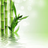 Green bamboo background. Green bamboo against bokeh background Royalty Free Stock Photos