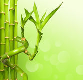 Green bamboo background. With copy space Royalty Free Stock Images