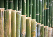 Green bamboo for background Stock Images