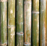 Green bamboo for background Royalty Free Stock Image