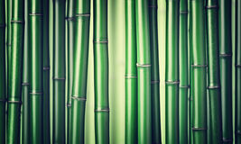 Free Green Bamboo Background Stock Image - 70077661