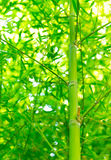 Green bamboo background Stock Images